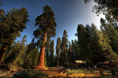The Giant Forest, Sequoia National Park